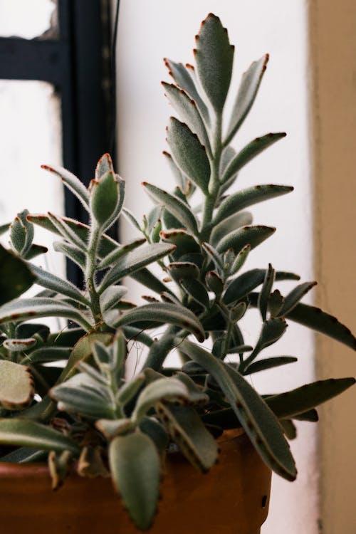 Darmowe zdjęcie z galerii z dekoracja, kaktus, roślina domowa, roślina doniczkowa