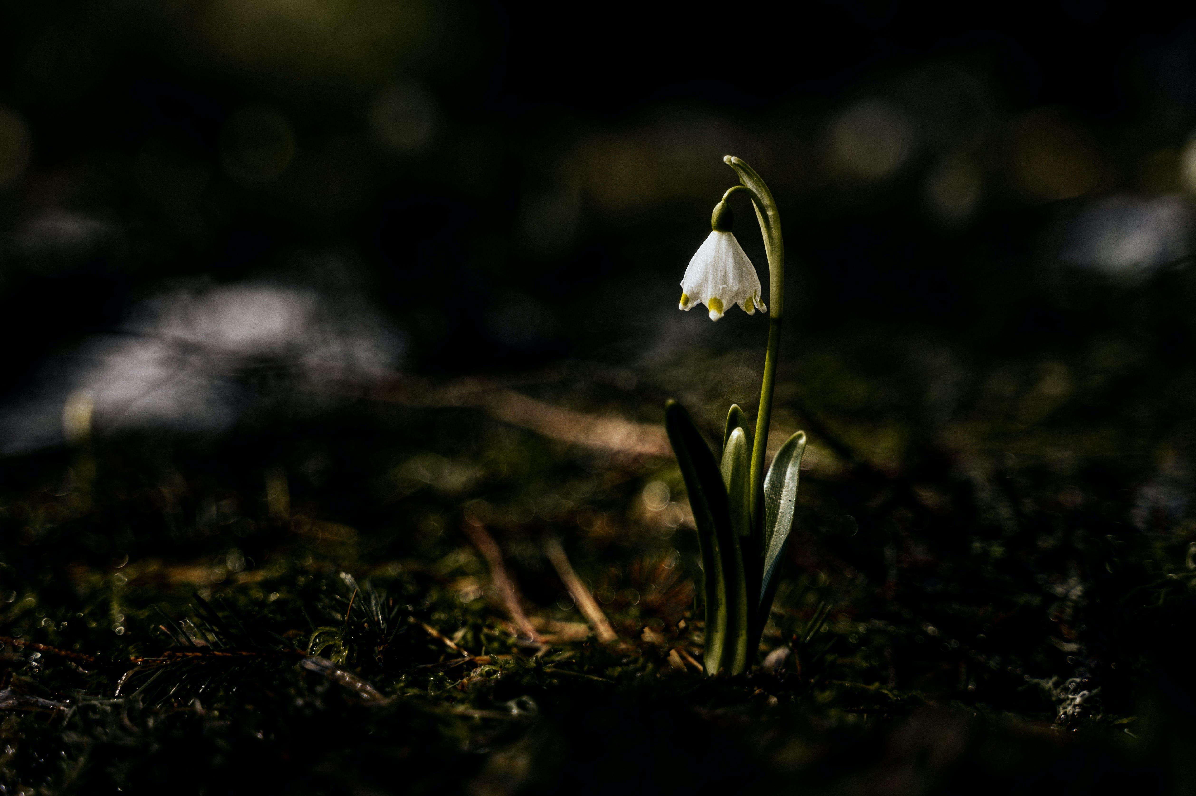 Ingyenes stockfotó 4k-háttérkép, fehér virág, fókusz, gyár témában