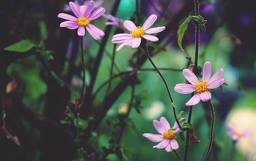 Darmowe zdjęcie z galerii z flora, kwiatowy, kwiaty, natura