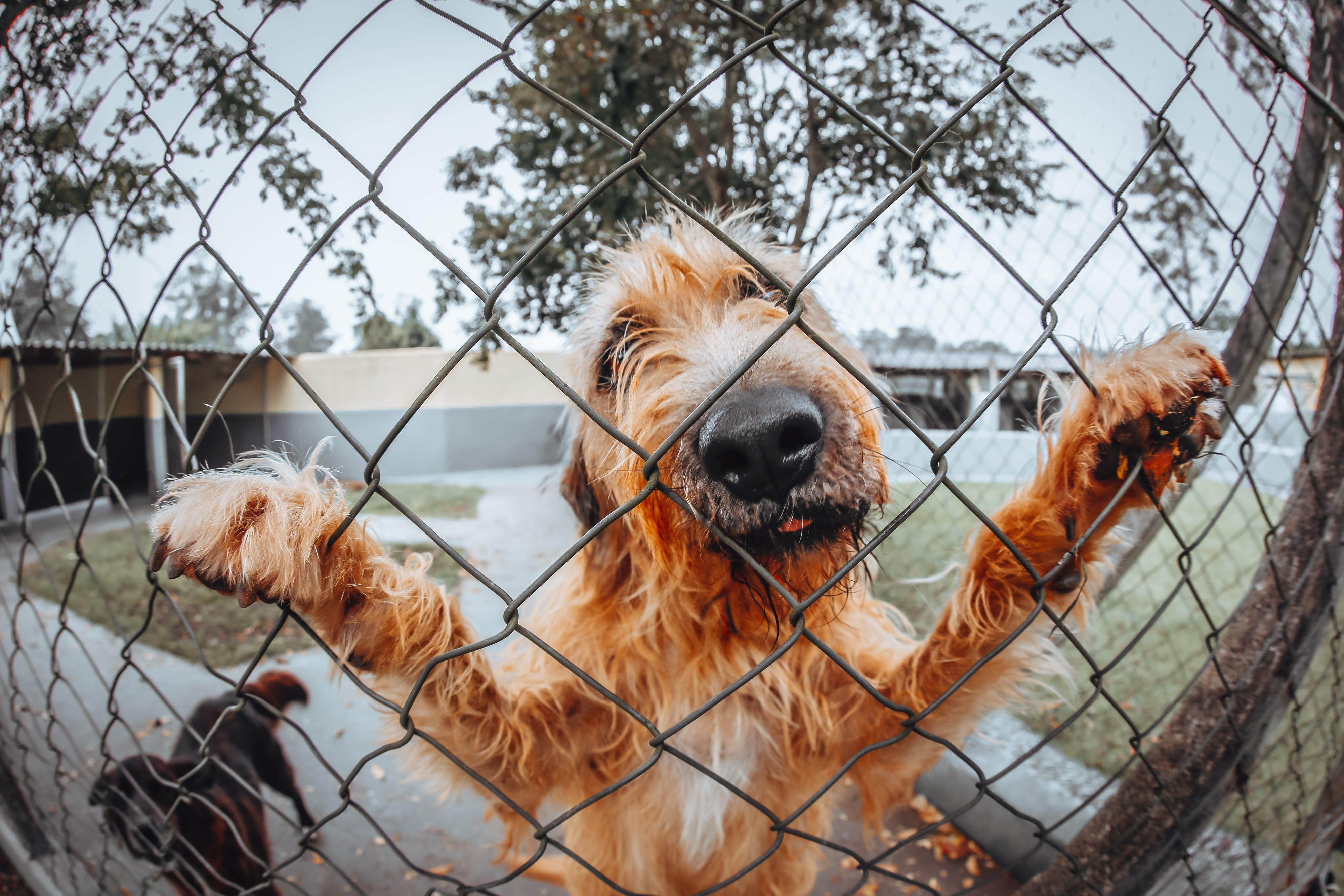 Kostnadsfri bild av däggdjur, förtjusande, hund-, hundar