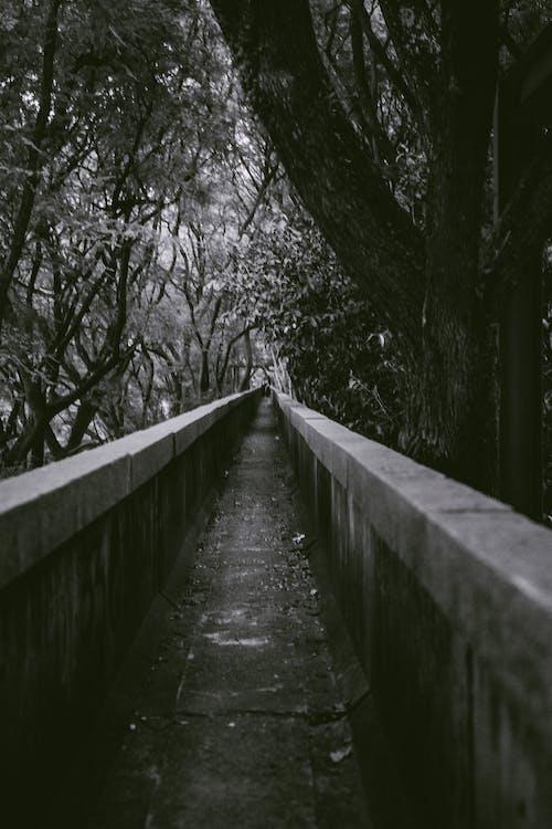 Безкоштовне стокове фото на тему «»