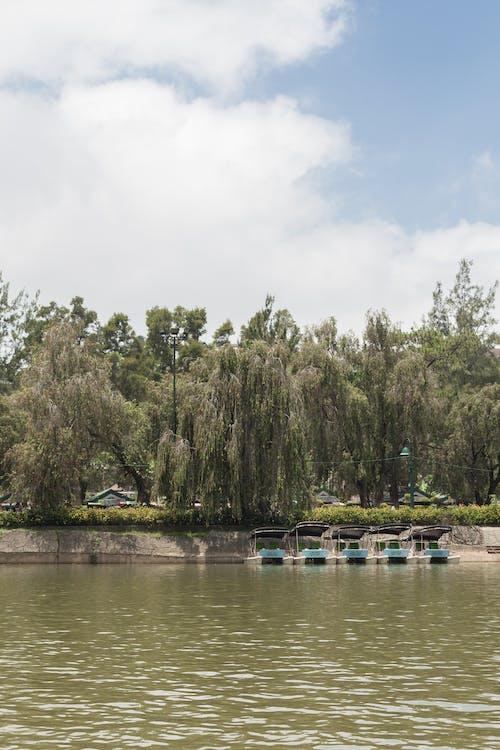 假日, 假期, 公園, 冒險 的 免费素材照片