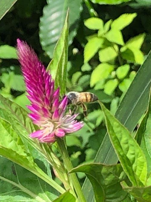 蜜蜂 的 免费素材照片