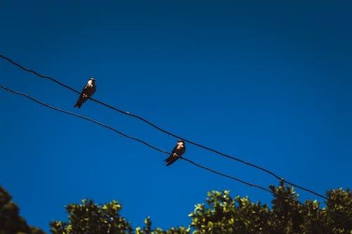 Free stock photo of bird