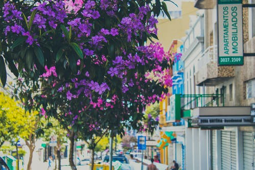 Free stock photo of beautiful flower, purple