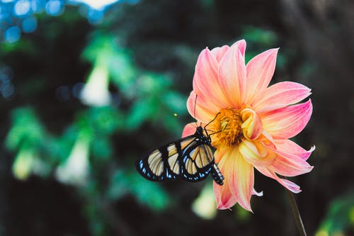 Free stock photo of beautiful flower, butterfly, dark green, pink