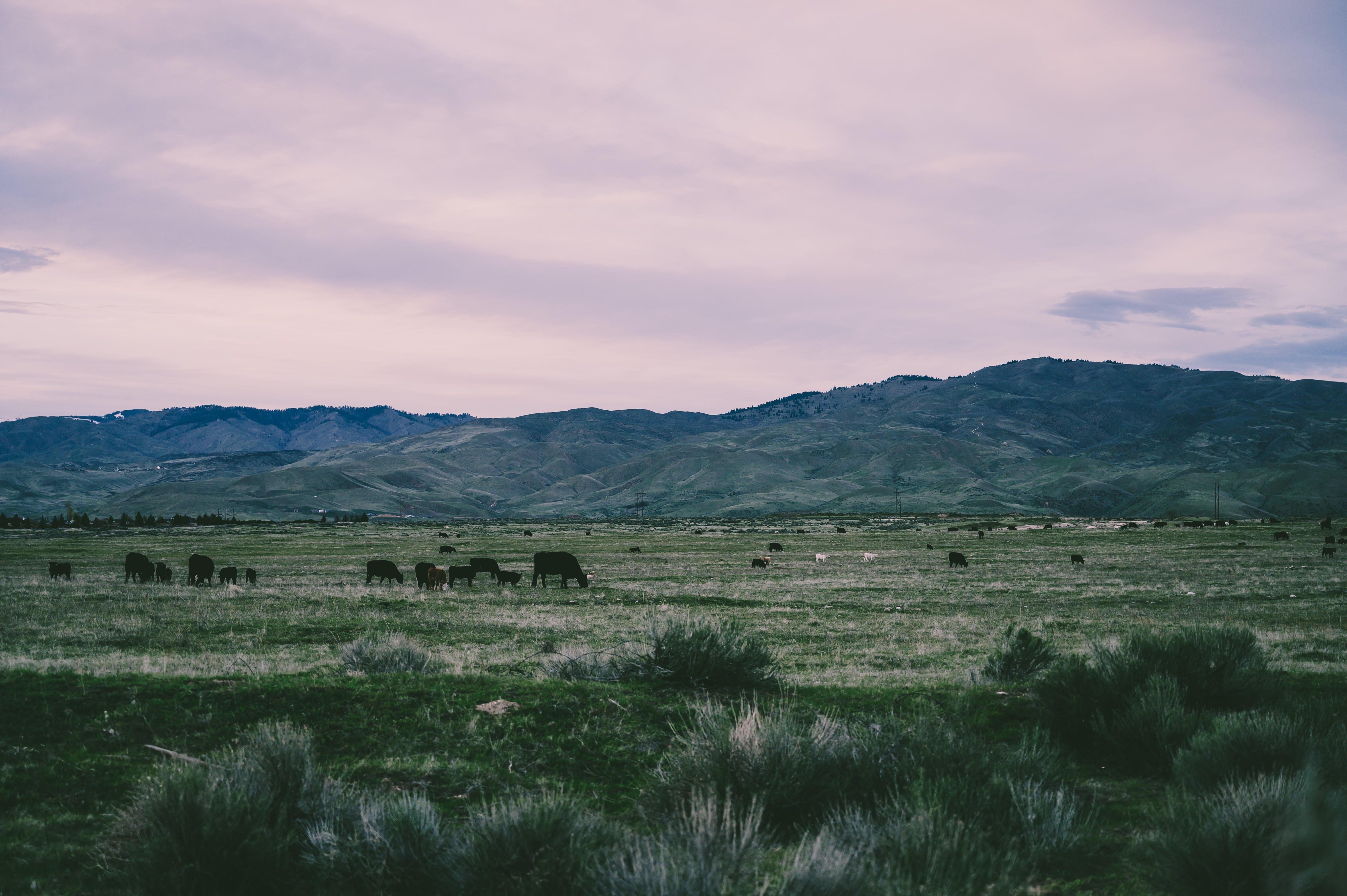 Gratis stockfoto met beesten, bergen, blikveld, decor
