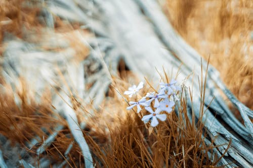 Free stock photo of desaturated, driftwood, flowers