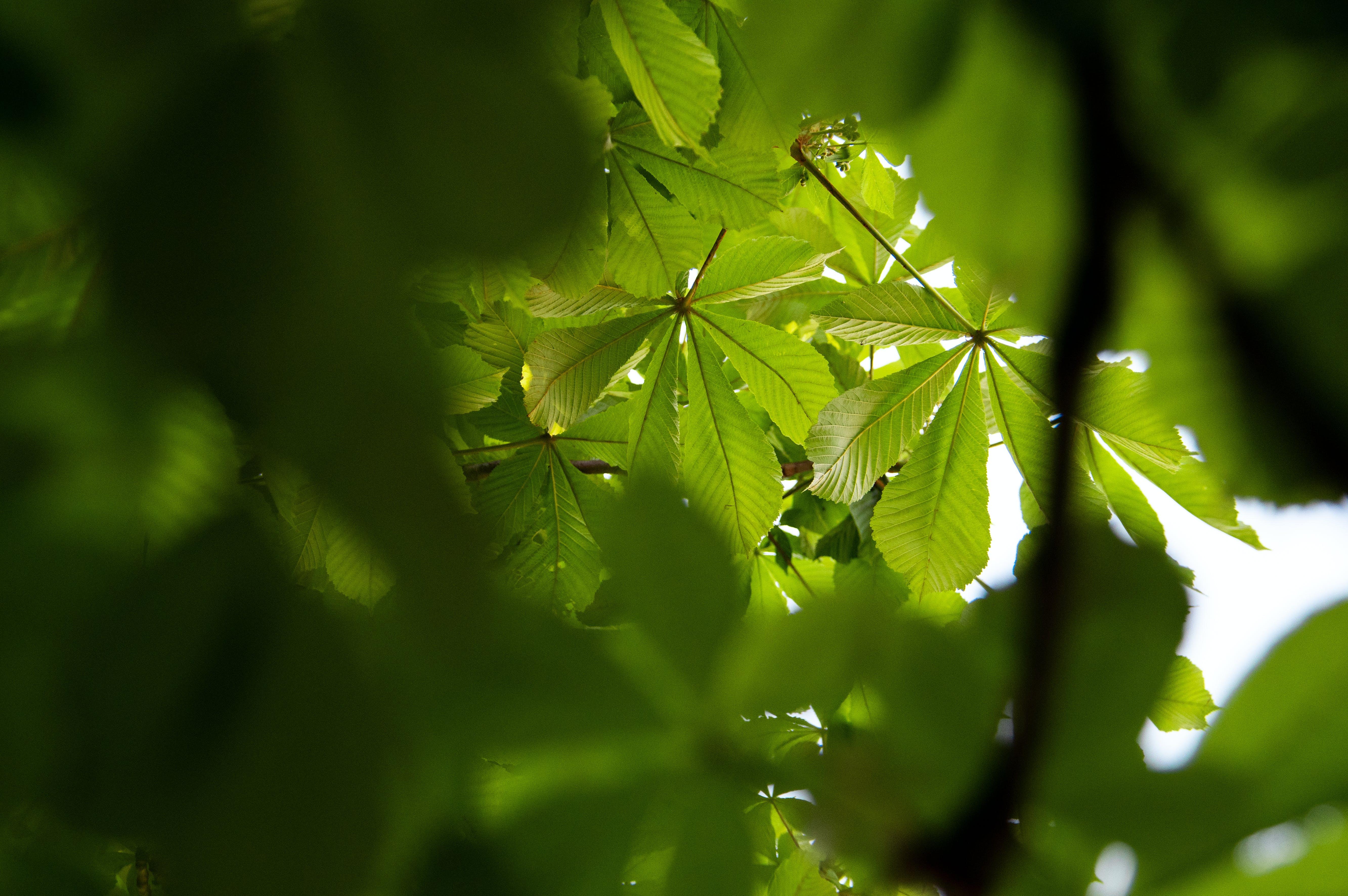 Gratis lagerfoto af baggrund, blad, farve, farverig