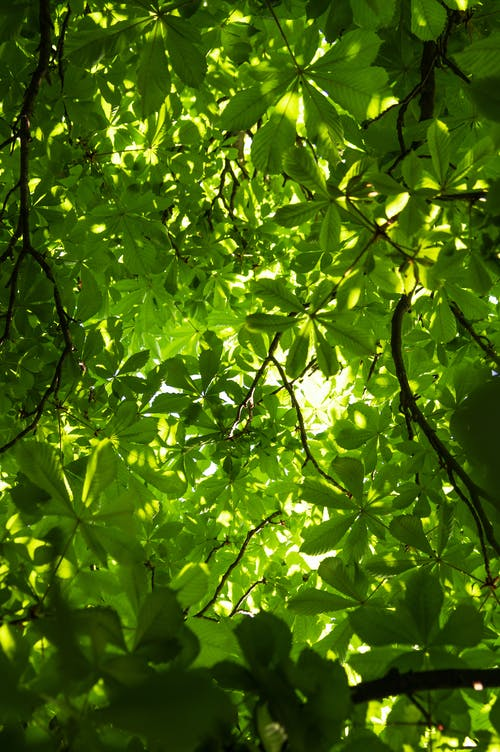 Foto d'estoc gratuïta de a l'aire lliure, aïllat, arbre, blanc