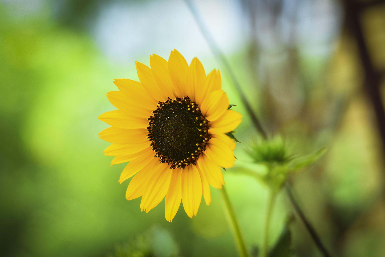 Gratis lagerfoto af bane, blomst, blomstrende, close-up