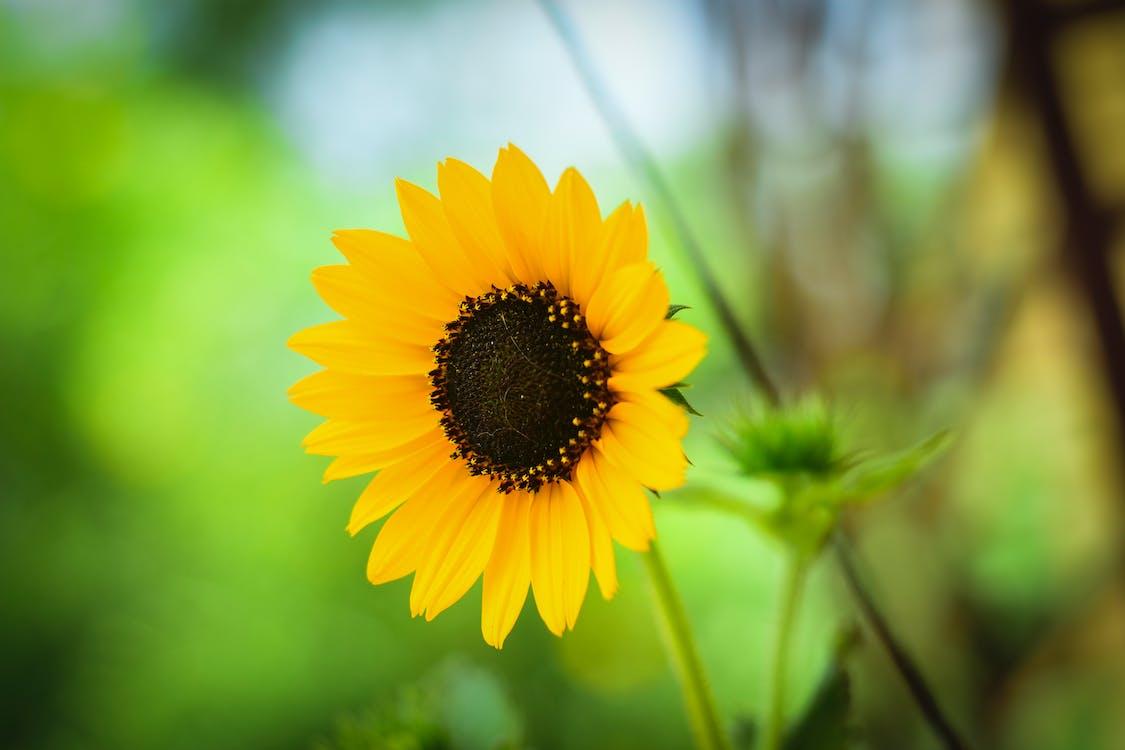 alegre, amarelo, ao ar livre