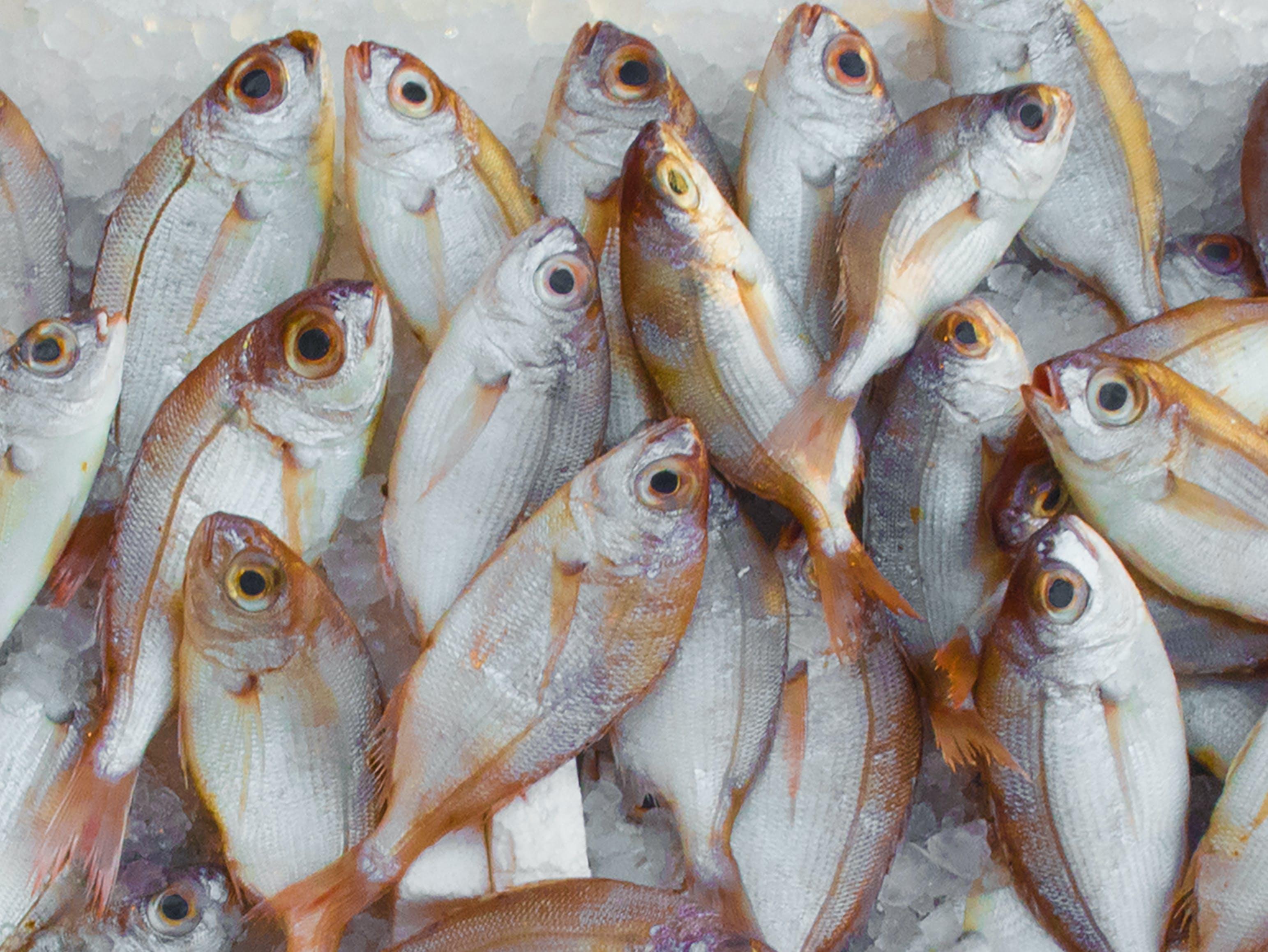 Gratis lagerfoto af aktie, fisk, fisk og skaldyr, fiskemarked