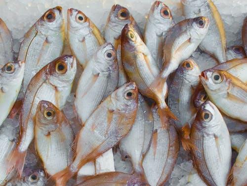 Ilmainen kuvapankkikuva tunnisteilla ale, jää, kala, kalaruoka