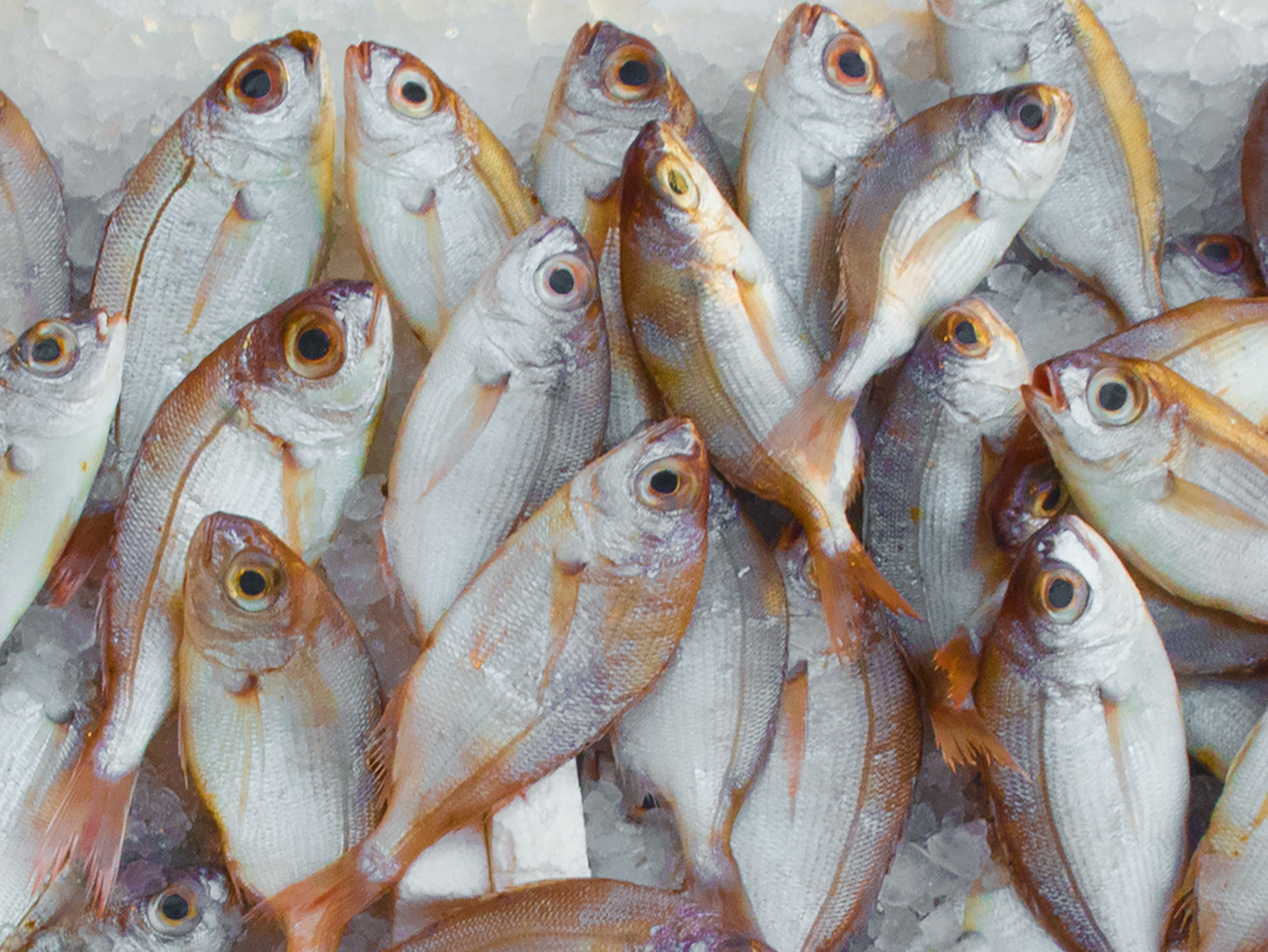 Fish for vitamin d