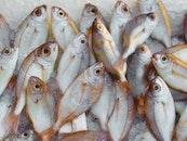 food, healthy, fishing