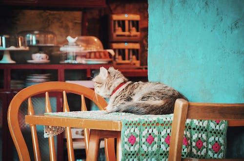 Kostnadsfri bild av bord, däggdjur, dagsljus, hus
