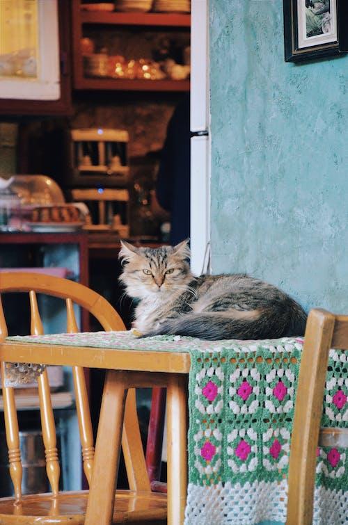 Kostnadsfri bild av bekvämlighet, bord, däggdjur, djur