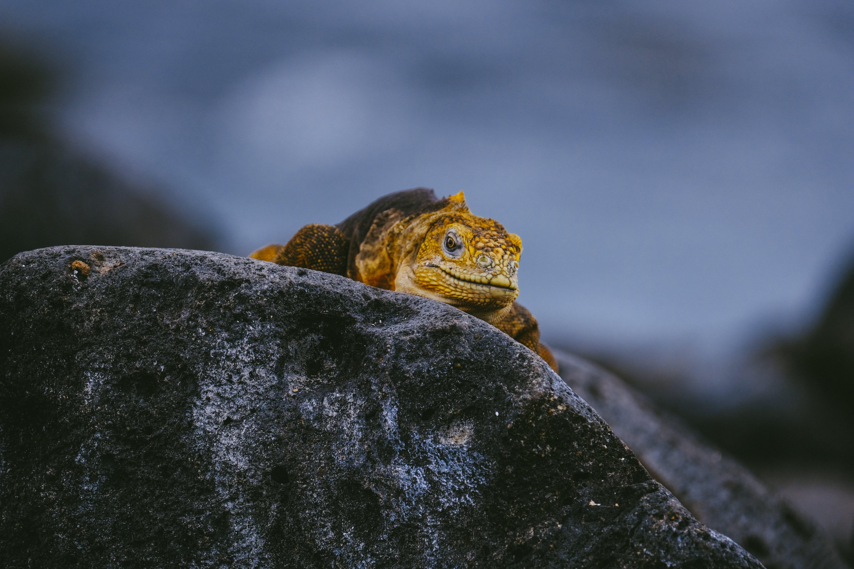 Foto profissional grátis de animais selvagens, animal, ao ar livre, close