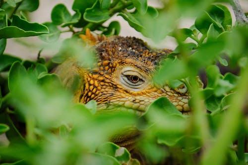 Brown Lizard Hiding on Plants