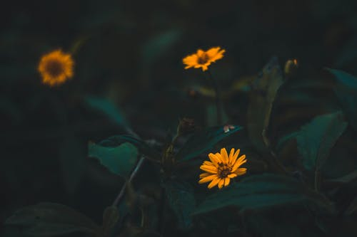 Gratis arkivbilde med åker, blomster, blomstereng, gule blomster