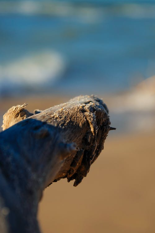 Free stock photo of beach, stick