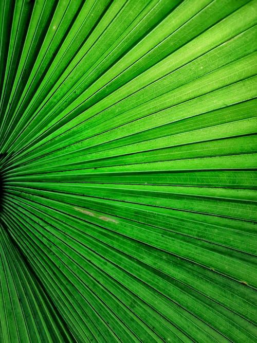 Kostenloses Stock Foto zu blatt, frisch, grün, grünes blatt