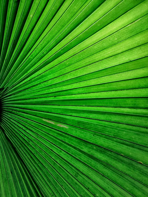Immagine gratuita di crescita, ecologia, foglia, foglia verde