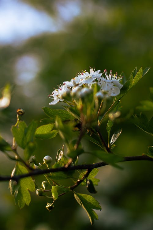 Ingyenes stockfotó fehér, fehér virág, gyár, gyönyörű virág témában