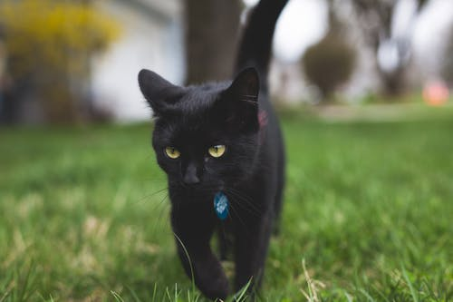 Free stock photo of black cat, kitten