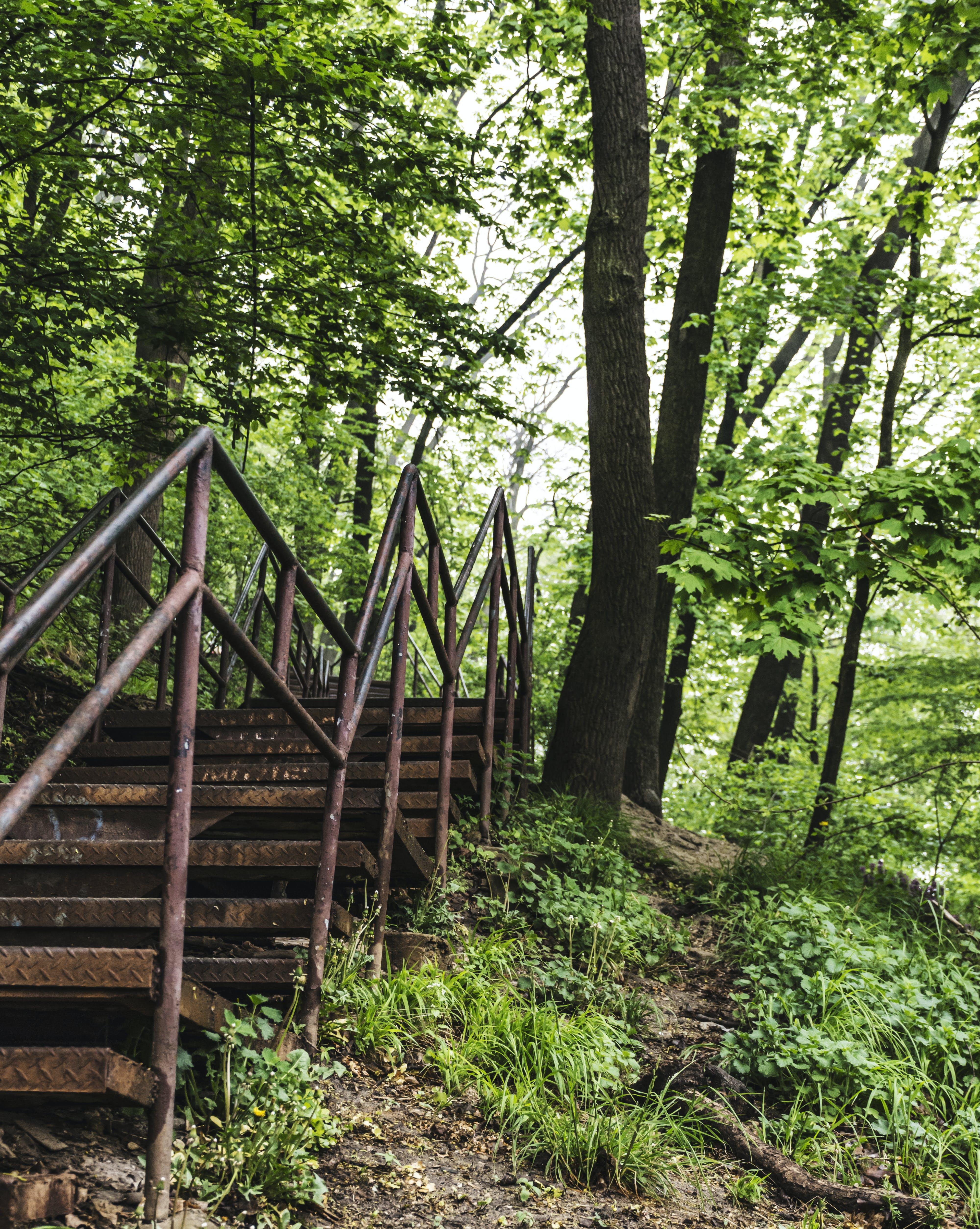 ağaçlandırma, merdivenler içeren Ücretsiz stok fotoğraf