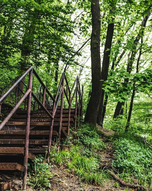 Gratis arkivbilde med skogplanting, trapper