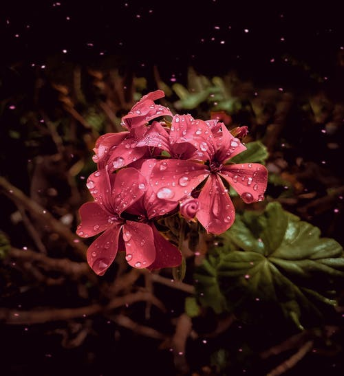 Free stock photo of Adobe Photoshop, after the rain, beautiful flower, brazil