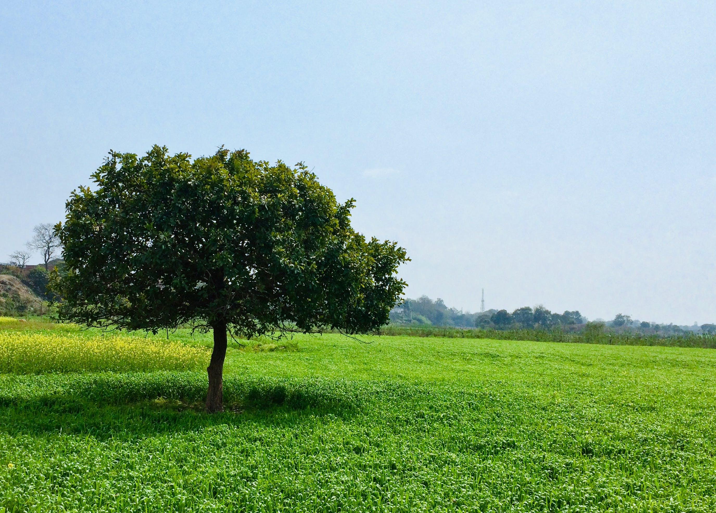 Základová fotografie zdarma na téma sluneční záře, strom, zelená