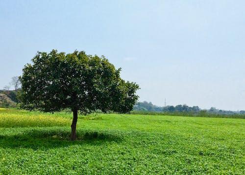 Бесплатное стоковое фото с дерево, зеленый, солнечный свет