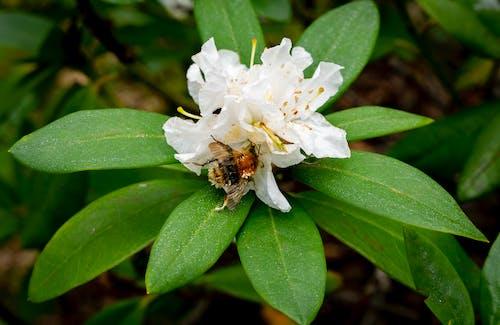 Ảnh lưu trữ miễn phí về bánh bao, beebread, con ong, lá