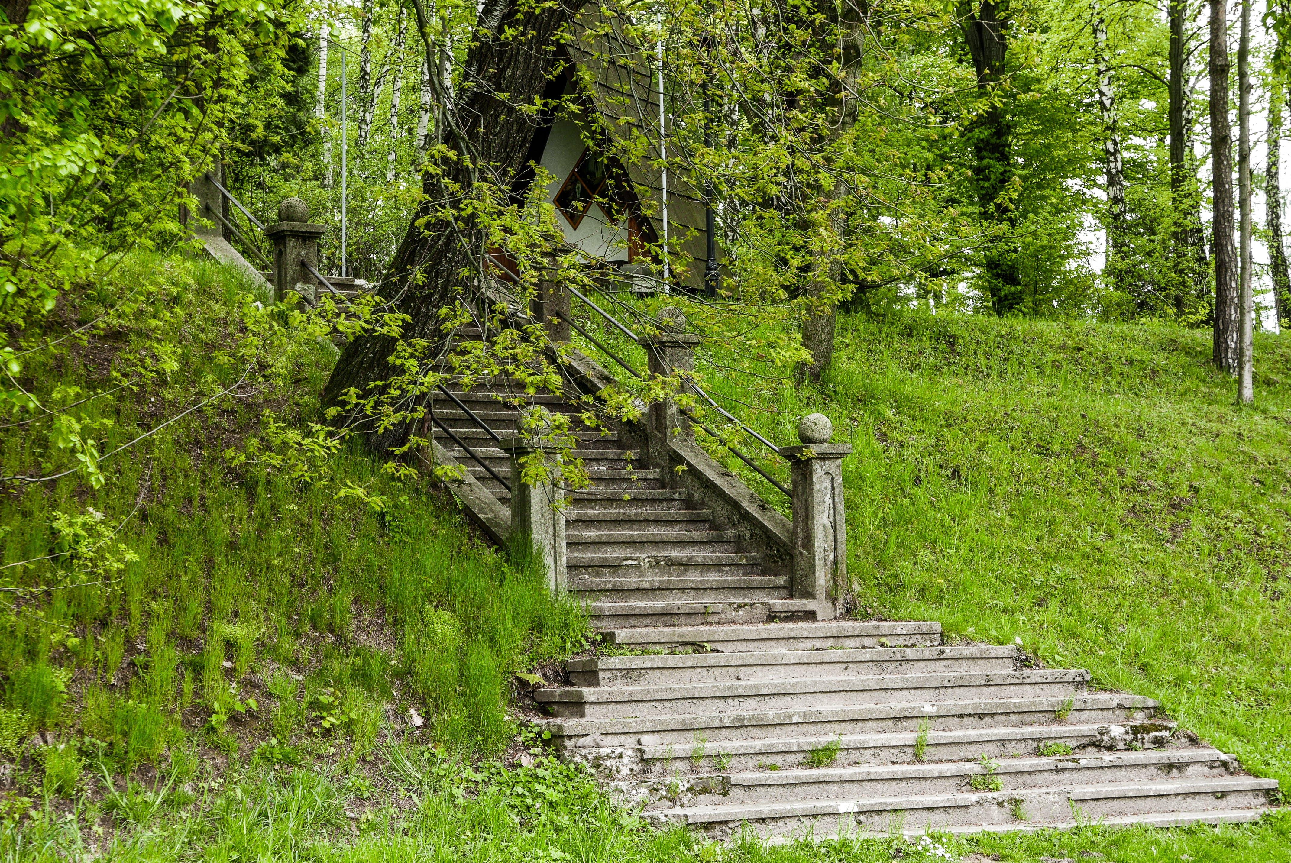 Základová fotografie zdarma na téma nahoře, park, schody, zelená