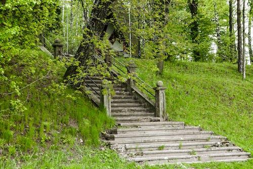 Ảnh lưu trữ miễn phí về cầu thang, công viên, màu xanh lá, tầng trên