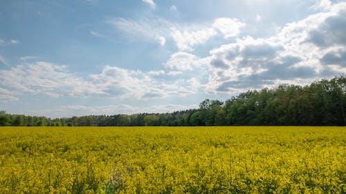 Fotobanka sbezplatnými fotkami na tému hracie pole, kvety, mraky, obloha