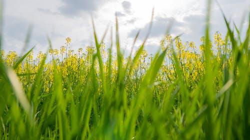 Kostnadsfri bild av blommor, fält, himmel, moln
