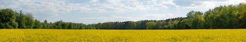 Kostnadsfri bild av blommor, fält, fjäder, gul