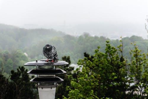 Gratis lagerfoto af bjerg, dagslys, fugl, grøn