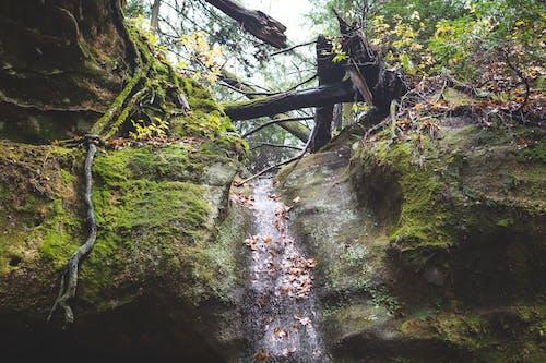 Free stock photo of green moss, moss, Mossy rocks
