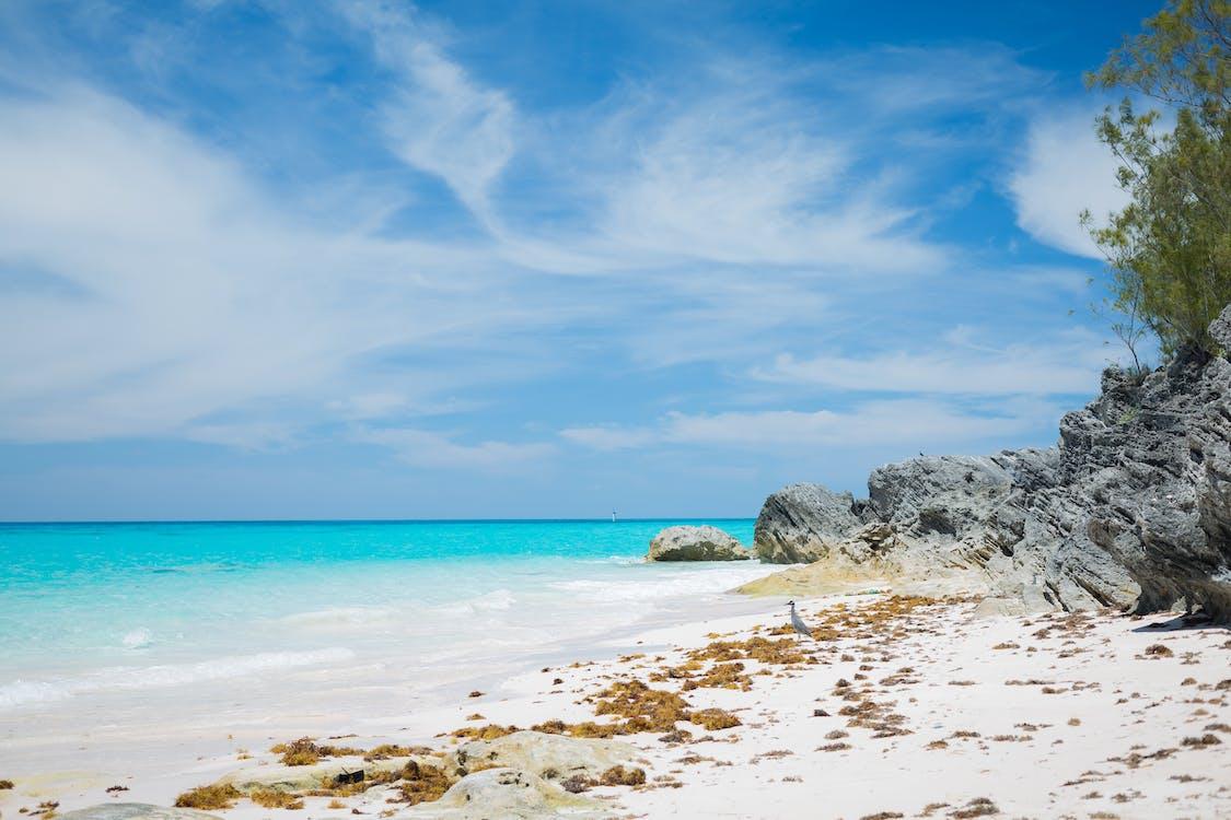 blauwe lucht, blauwe oceaan, grijze reiger