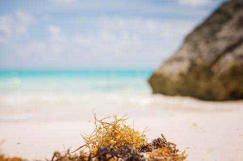 ビーチ, ブルーオーシャン, 海洋, 海藻の無料の写真素材