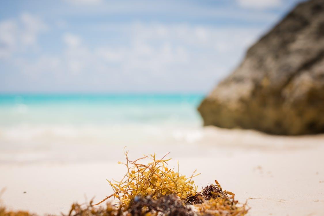 beach, Blue ocean, ocean