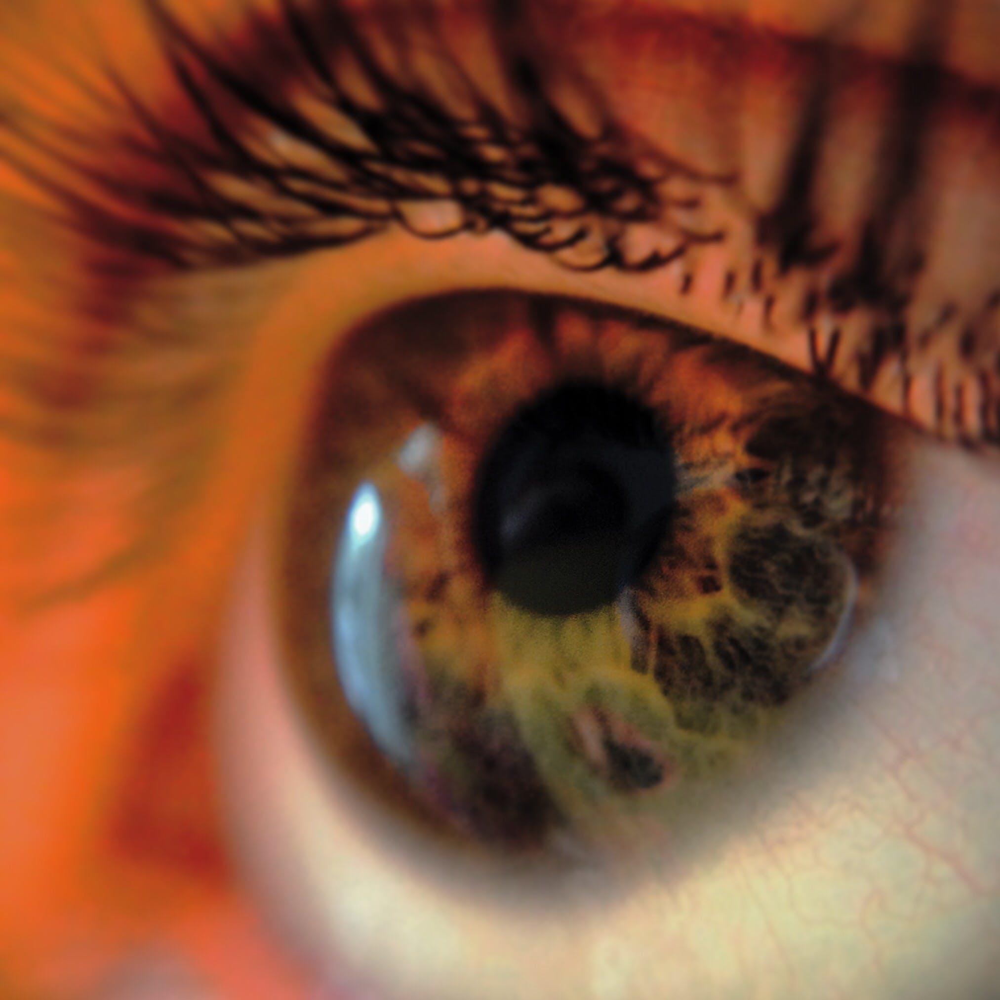 Foto stok gratis bulu mata, daya lihat, makro, mata