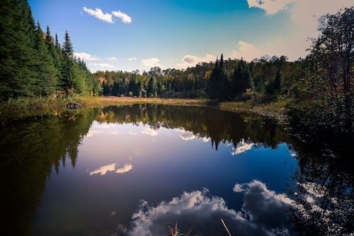 Ingyenes stockfotó 4k-háttérkép, békés, ég, fák témában