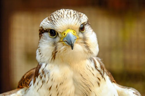 Brown and White Bird of Prey