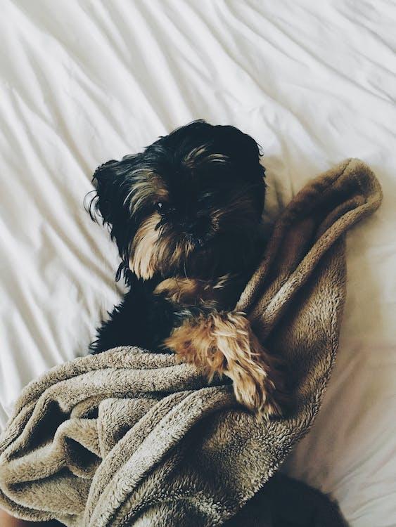 ágy, állat, aranyos